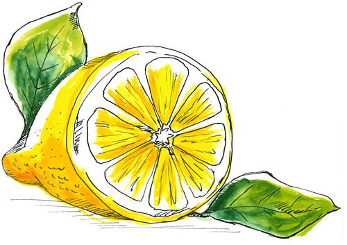 Cytryna - o Sokowirówce