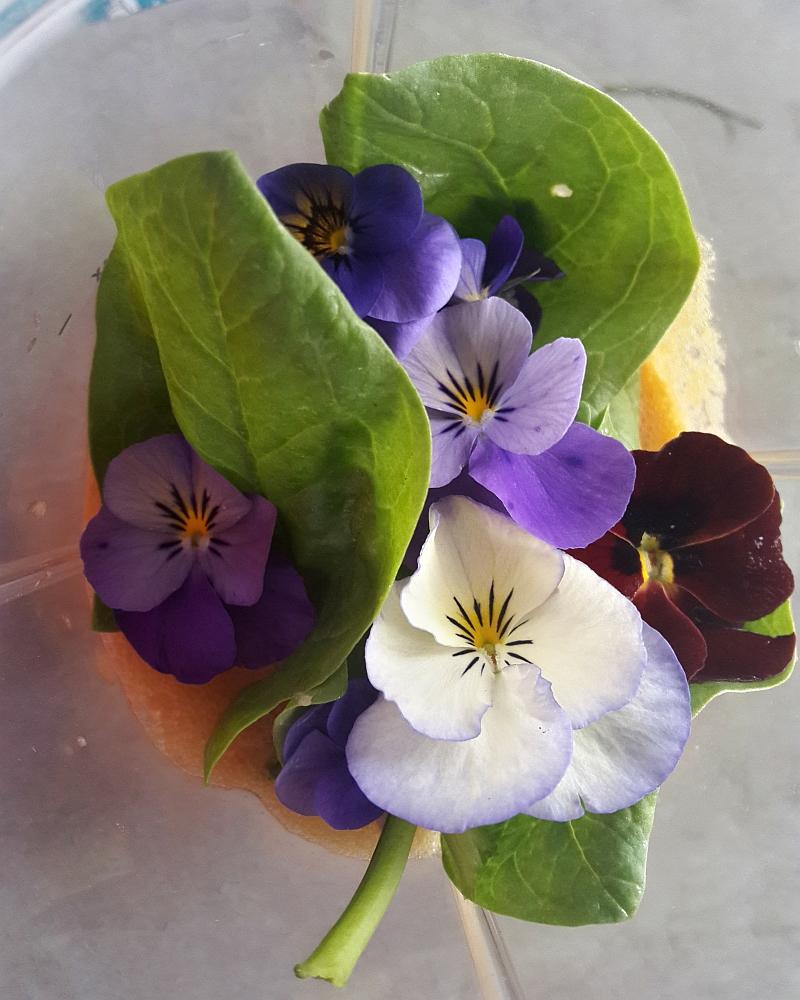 jadalne kwiaty - bratek